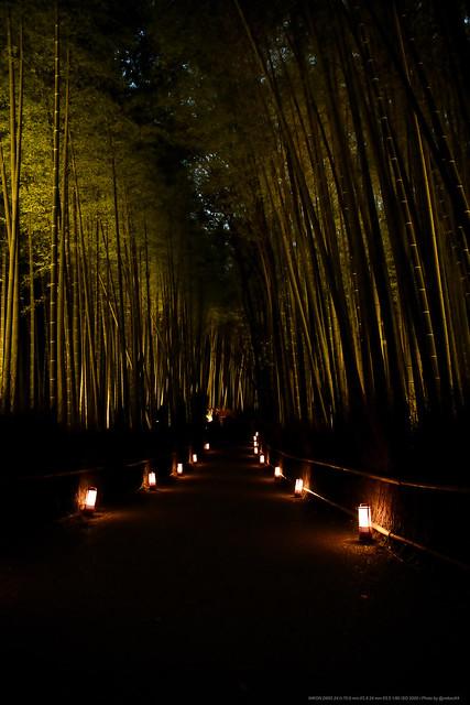 Lightup Arashiyama