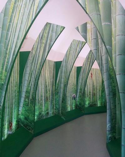 As if through bamboo #toronto #torontozoo #pandas #giantpandaexperience #gate #bamboo  #latergram