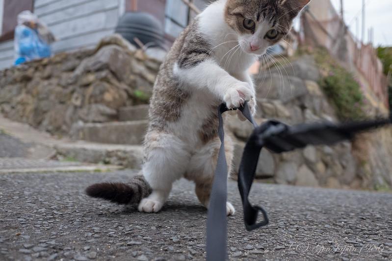 田代島 ネコ