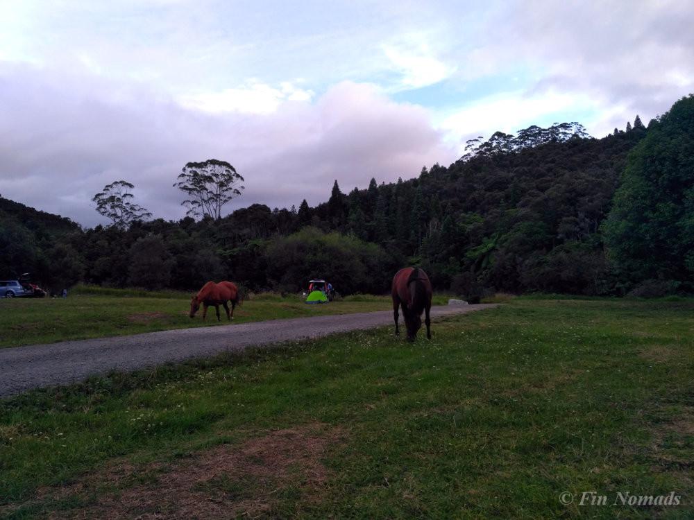 Free camping North New Zealand