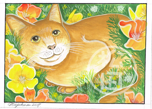 Marmalade Cat with California Poppies
