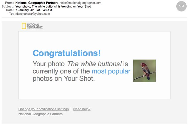 Your photo The white buttons is trending on Your Shot