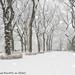 Central Park Snow (20171209-DSC04513)