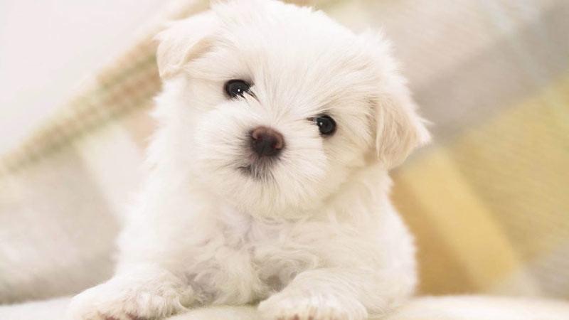 Istilah doggo mengacu pada anjing peliharaan.