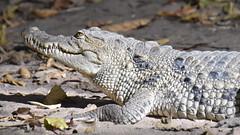 Kanchilly crocodile pool
