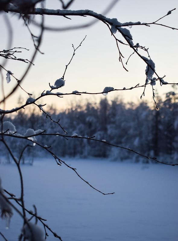 talvi16