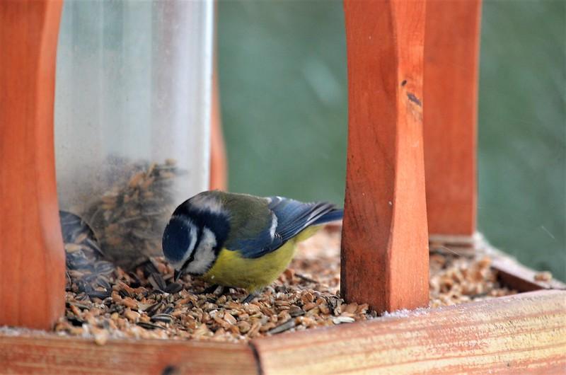 Birdhouse 10.12 (31)