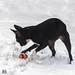 Julie-Schnee 10-12-17-3.jpg