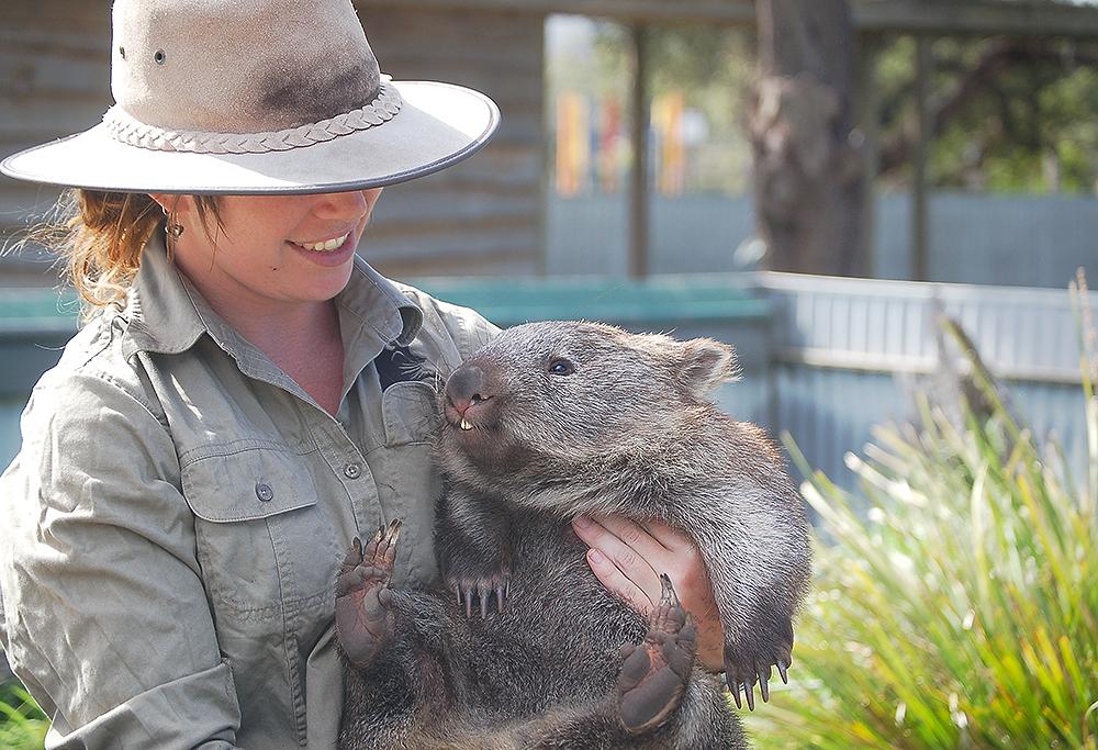 _wombat_Sarah_1_
