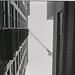 untitled20171214-LA_DEC_2017_ARISTA400_35mm_121.jpg by shawheen // clockcatcher