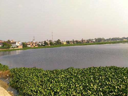 चम्पारण के बीचोंबीच स्थित मोती झील, मनों की शृंखला का एक हिस्सा जो बाढ़ के दिनों में पानी के जलग्रहण का काम करती है