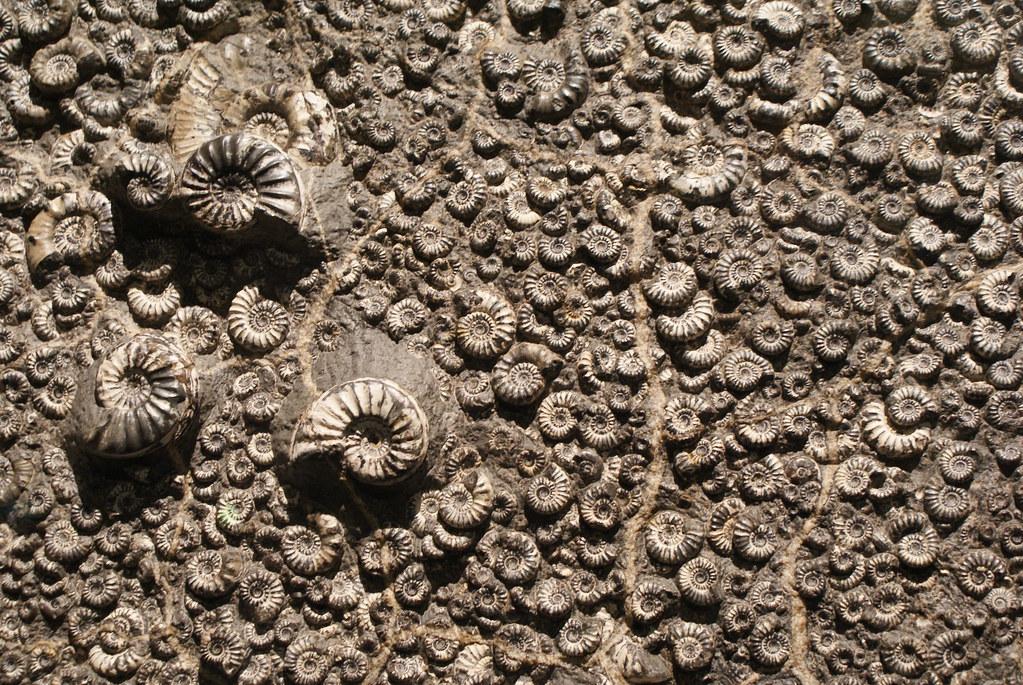 Fossiles dans la collection du musée des Confluences à Lyon.