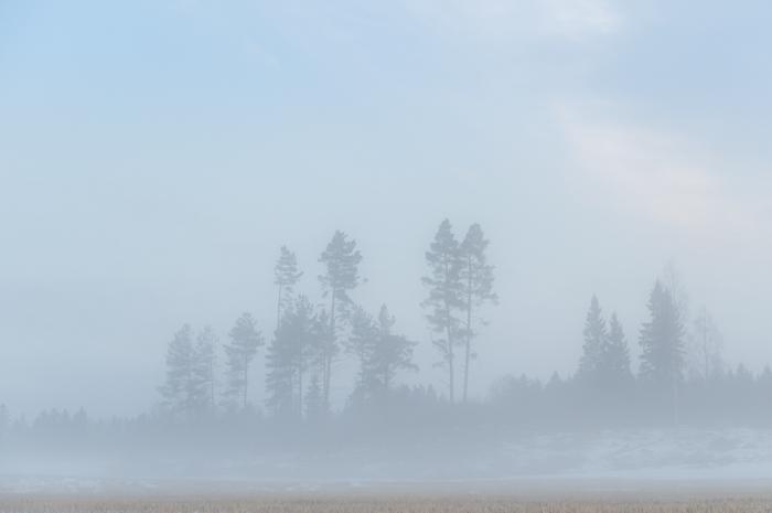 winter wonderland sumuinen maalaismaisema talvella rural metsämaisema forest view