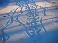 Bike and dog tracks