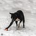 Julie-Schnee 10-12-17-4.jpg