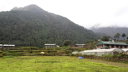 Field in Nepal