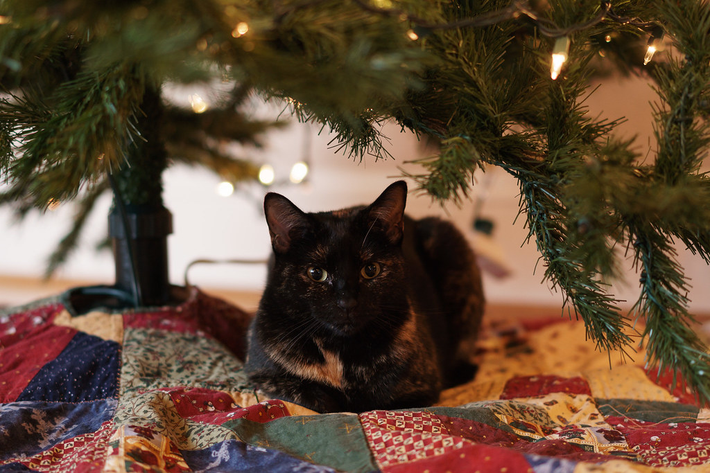 Our tortoiseshell cat Trixie sitting under the Christmas tree