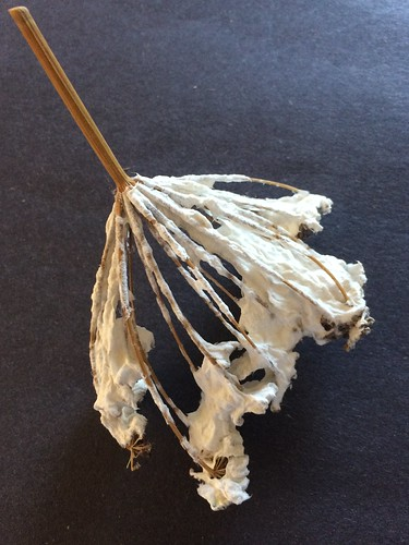 Paper pulp dipping