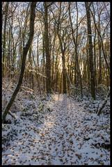 Chemin enneigé en sous-bois