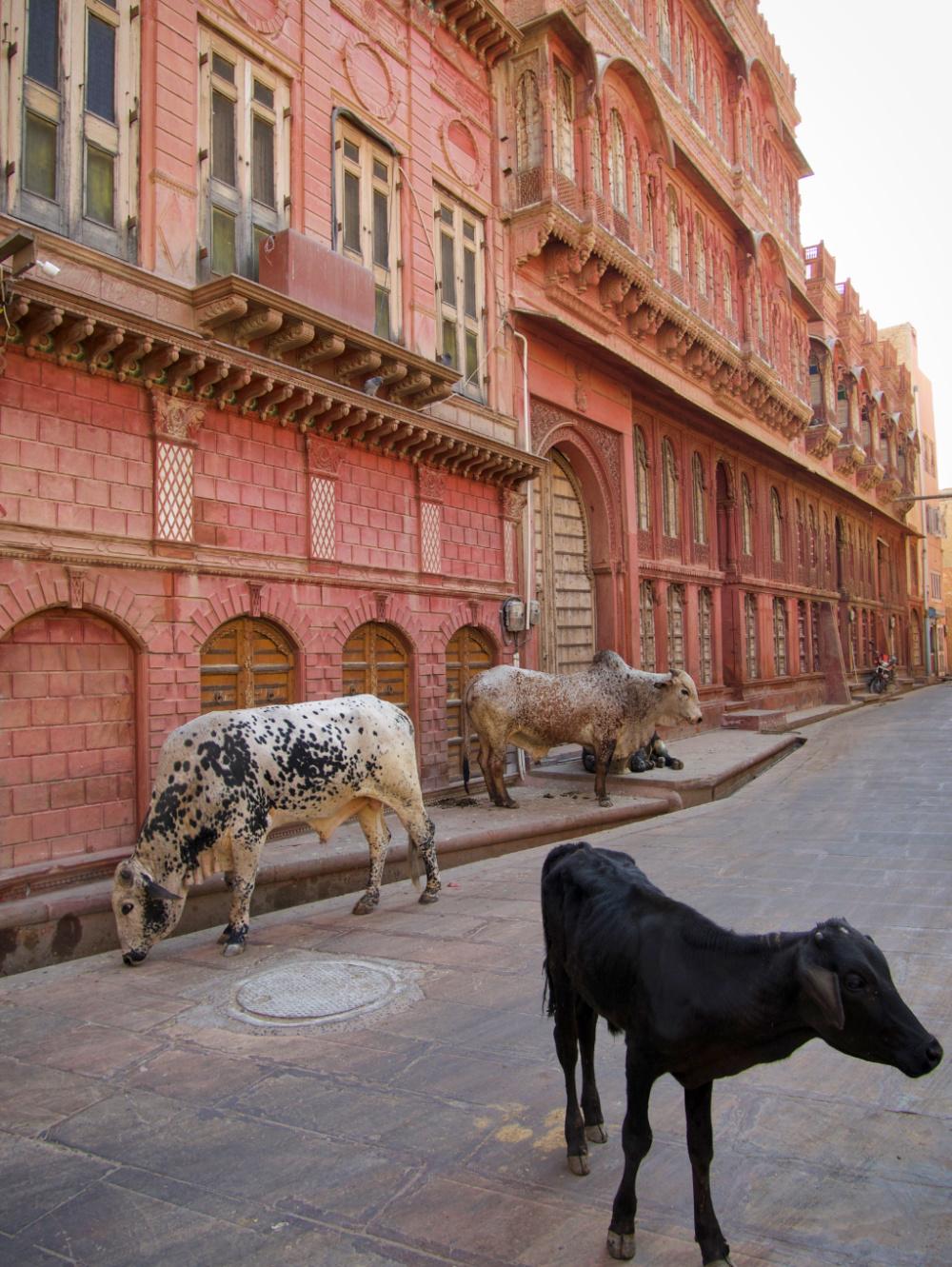 399-India-Bikaner