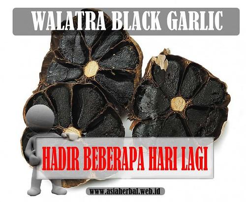 Khasiat Dan Manfaat Walatra Black Garlic