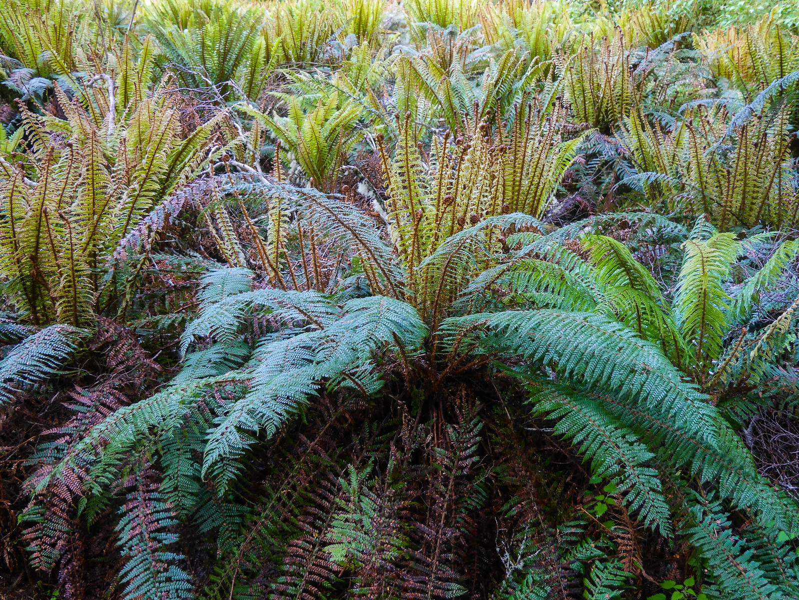 Ferns everywhere