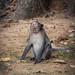 Monkeys-9