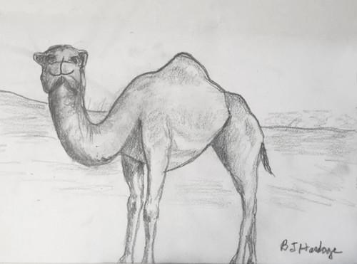 Mom's Camel #1
