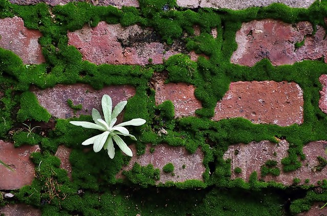 Bricks, Moss and Weeds