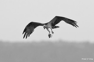 Landing on My Nest