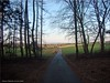Im Wald - in the forest
