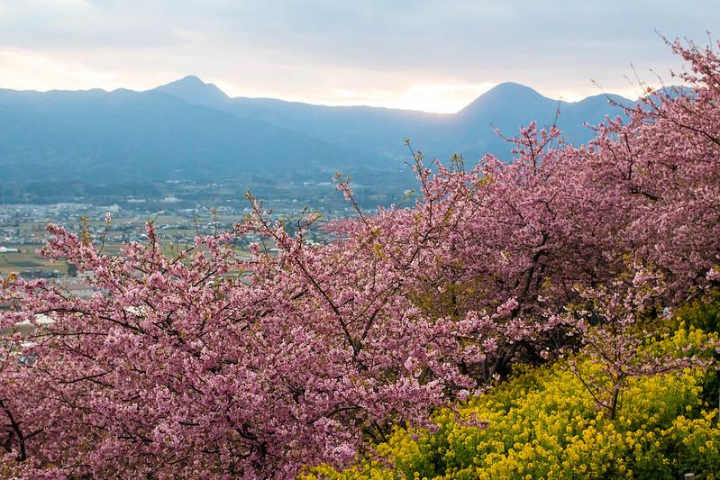 20160221-金時山-0416.jpg