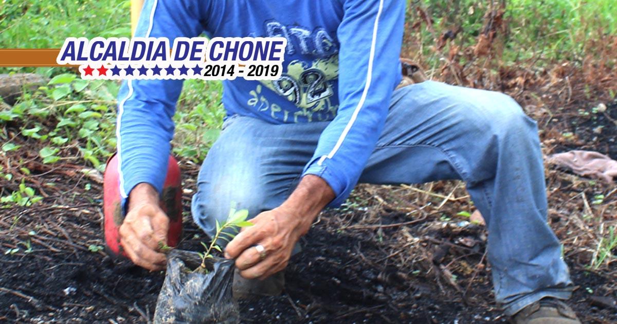 Plantas adornarán paso lateral de Chone