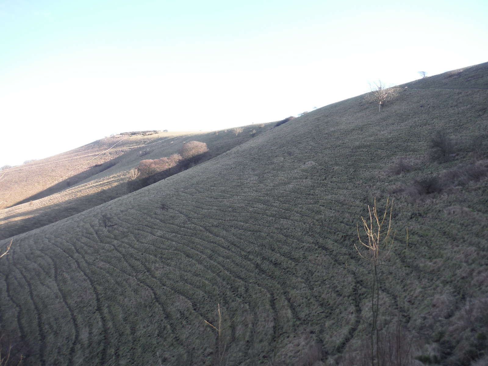 Steep? Ascent out of Firle to South Downs Ridge SWC Walk 181 - Lewes to Seaford via West Firle