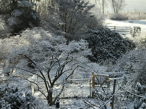 winter gardens IMG_1730