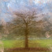 360 Degree View of Tree