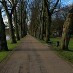 Path in Avenham Park