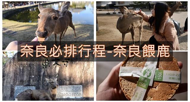 奈良餵鹿2