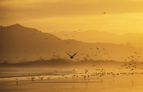 Gulls flocking together