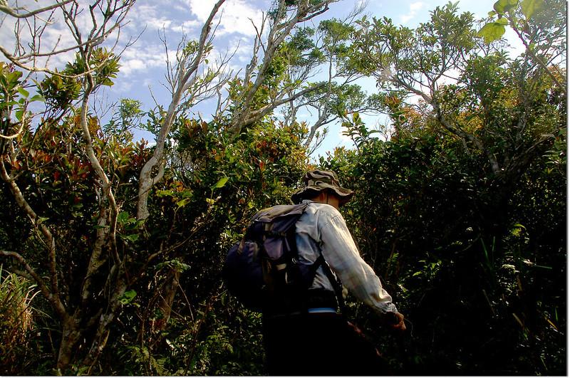 牡丹路山登山路徑 2