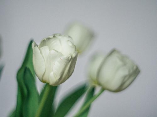 021 Tulip time 3