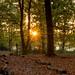 Warm Autumn Light
