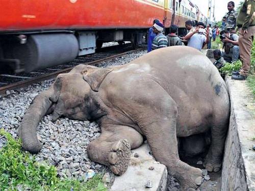 ट्रेन दुर्घटना में हाथी की मौत