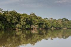 Shores of the Sangha river, CAR
