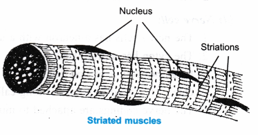 ncert-class-9-science-lab-manual-plant-and-animal-tissues-6