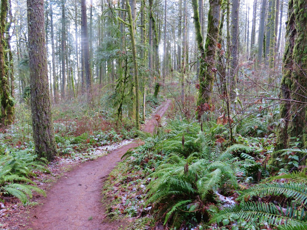 Section 36 Loop Trail