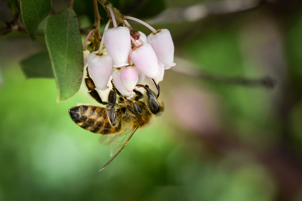 20180204_Bee-loved_001