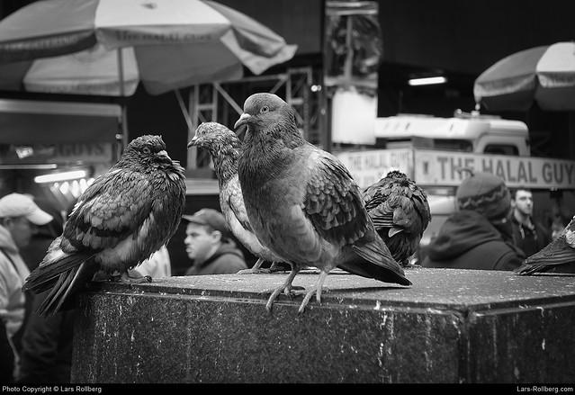 Doves, New York, United States