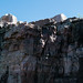 Tall Quartzite