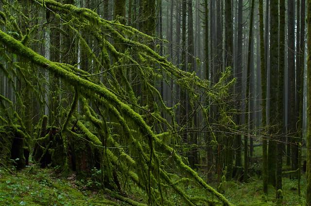 Damp Moss